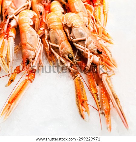 Shrimp cocktail background over white Ice on a market stall close up. Group of Unshelled tiger shrimps as gourmet seafood macro.  - stock photo