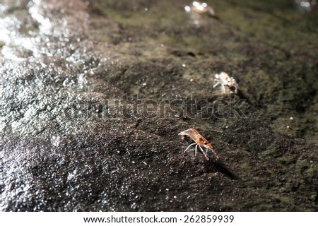 Shrimp march,Unseen Thailand