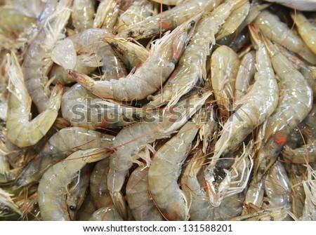 Shrimp stock - stock photo