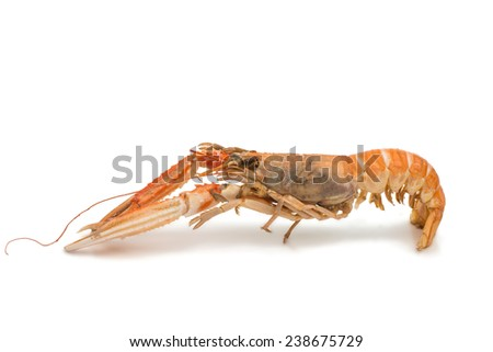 shrimp with pincers isolated on white background - stock photo