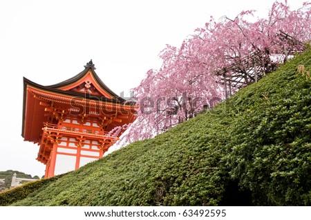 Shrine in Japan - stock photo