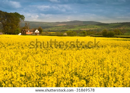 Shropshire farmland planted with rapeseed plants with rolling hills in background