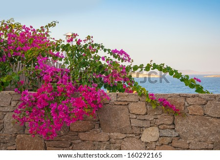 Shrub with pink flowers on the background of the  sea and sky ... - stock photo