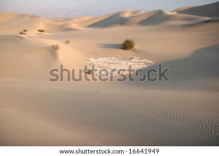 Shrubs in sand dunes. Stovepipe Wells. Death Valley national park. California. USA - stock photo
