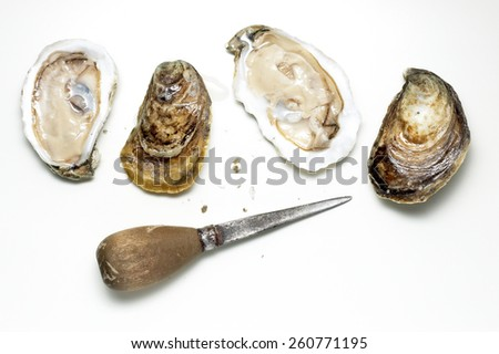 Shucked Oysters - stock photo