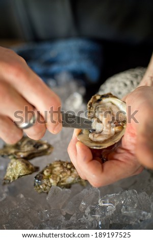 Shucking fresh oysters with a knife over an ice bin. - stock photo