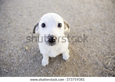Shy little puppy sitting outside - stock photo