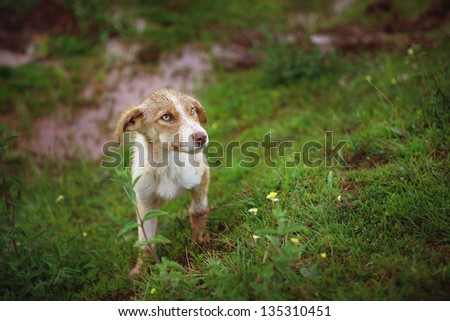 Shy Stray Dog - stock photo
