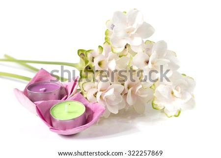 Siam tulip or Curcuma flower on white background - stock photo