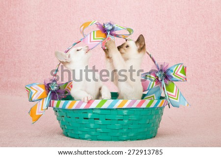 Siamese and Oriental kittens sitting inside green basket playing with Spring ribbon on pink background  - stock photo