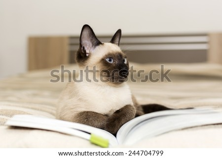 Siamese cat lying on a book - stock photo