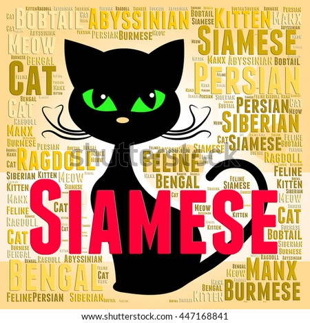 Siamese Cat Meaning Reproducing Offspring And Domestic