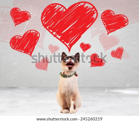siamese cat meowing and looking up to some valentines hearts - stock photo