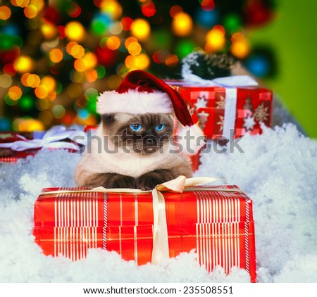 Siamese cat wearing Santa hat with present against Christmas light - stock photo