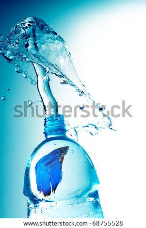 Siamese Fighting Fish trapped in a bottle - stock photo