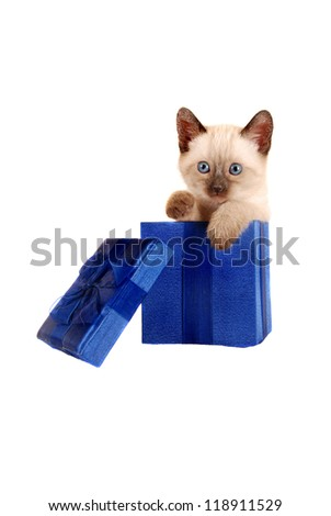 Siamese kitten in a blue gift box on a white background - stock photo