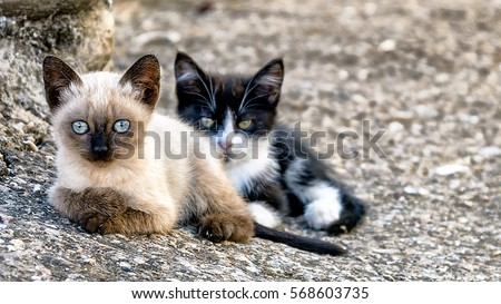 Kitten Stock Images Royalty Free Images Amp Vectors