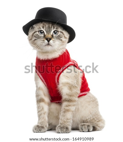 Siamese with red top and top hat, sitting, looking at the camera, 5 months old, isolated on white - stock photo