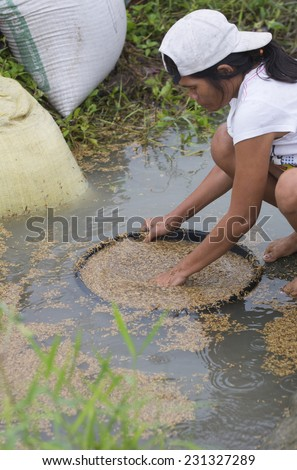 Sibalom, Philippines - October 16, 2014: Woman cleaning rice in a small stream next to a rice paddy on Panay island in Visayas in the Philippines - stock photo