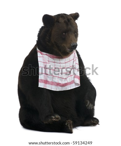 Siberian Brown Bear, 12 years old, sitting with bib on in front of white background - stock photo