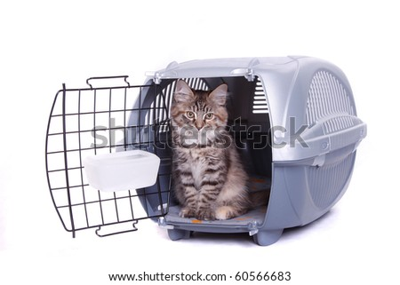 Siberian cat in carrying - stock photo