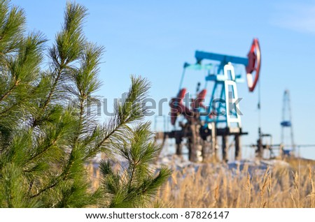 Siberian cedar grows in the vicinity of oil field. Respect for nature - stock photo