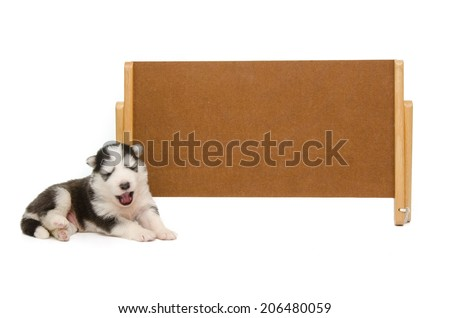 Siberian husky puppy sleep with banner