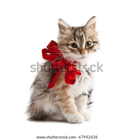 Siberian kitten with red ribbon - stock photo