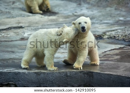 Sibling kiss on the neck of a polar bear baby. - stock photo