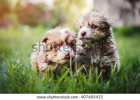 Siblings mixed breed puppies running outdoor - stock photo