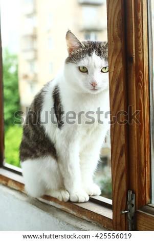 sibrian tom cat sit on the balcony close up photo - stock photo