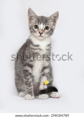 Sick and white striped kitten sitting on gray background - stock photo