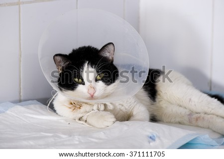 Sick cat - stock photo