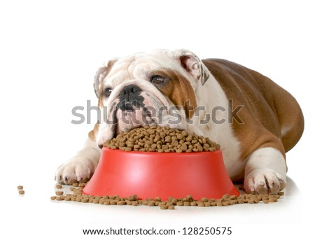 sick dog - stock photo