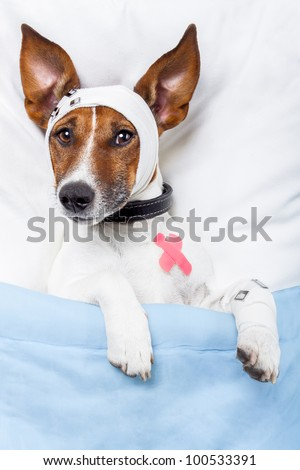 Sick dog with bandages lying on bed and sleeping