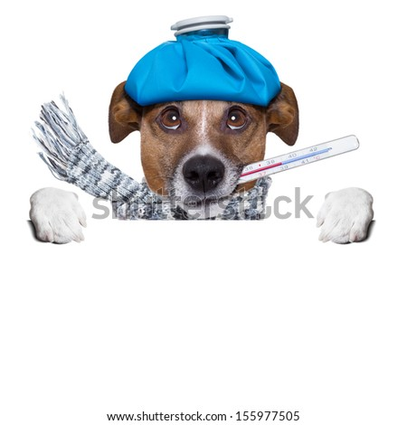 sick dog with fever behind a  blank placard - stock photo