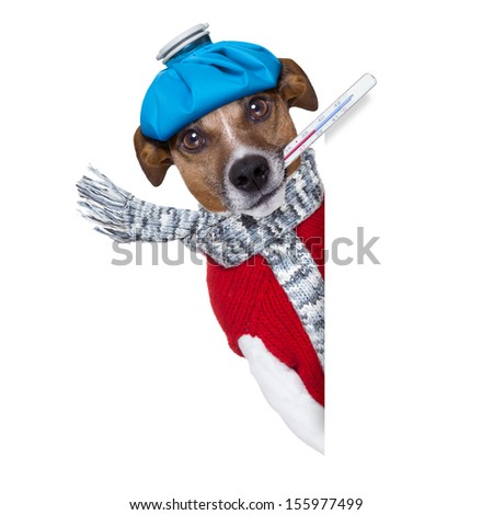 sick dog with fever beside a  blank banner - stock photo