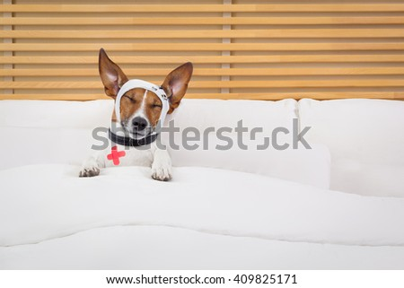 sick ill dog in bed sleeping or resting suffering pain - stock photo