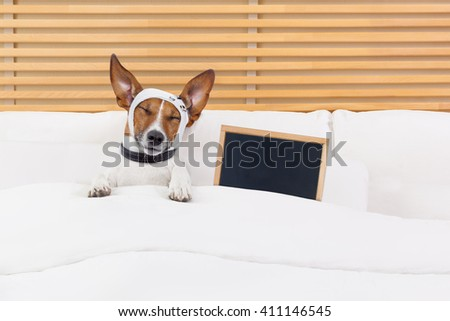 sick ill  dog in bed suffering pain with blackboard or placard  - stock photo