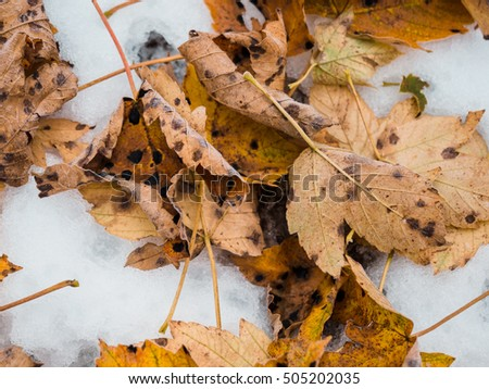 Sick leaves in the snow