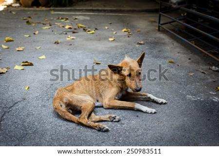 Sick stray dog  - stock photo