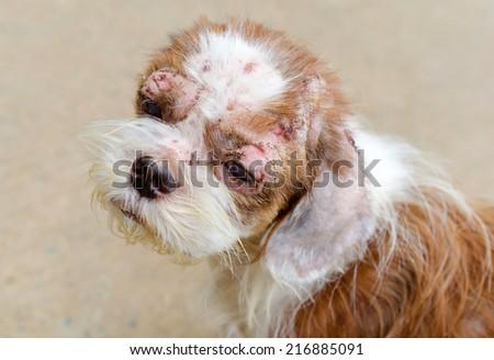 Sick stray dog in Foundation. - stock photo