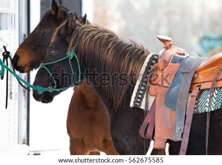 Side Saddle Stock Images Royalty Free Images Amp Vectors