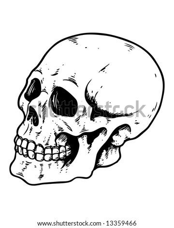 side profile skull image - stock photo