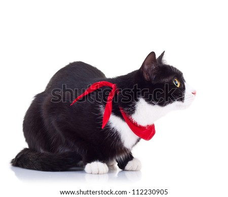 side view curious black and white cat wearing a red scarf on white background