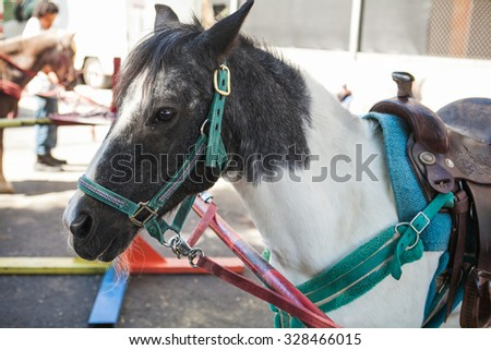Side view head shot of a white and gray pony ready for riding - stock photo