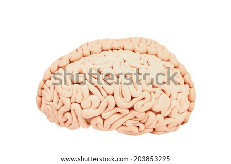 side view human brain handmade form plasticine isolate on white background with clipping path - stock photo