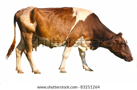 side view of a brown cow in front of a white background