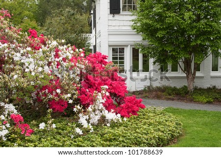 Side view of a home with spring garden in bloom with azaleas.