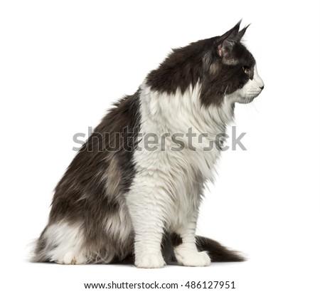 pbs nature super cats